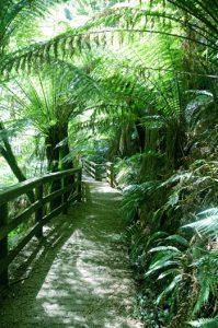 Victoria in Australien Regenwald