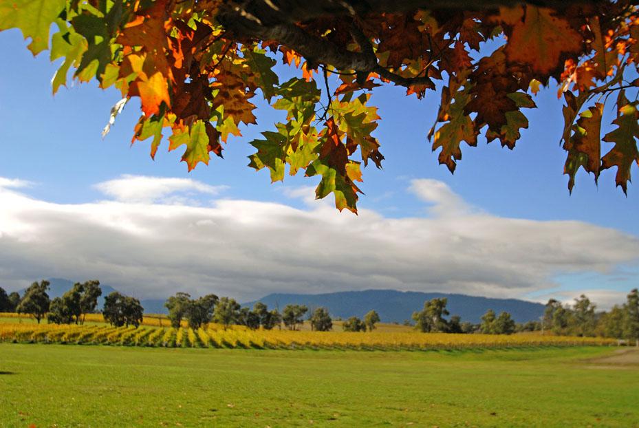 Victoria Australien: Yarra Valley