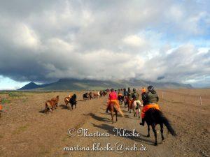 Reiten in Island: Die Herde läuft frei mit.